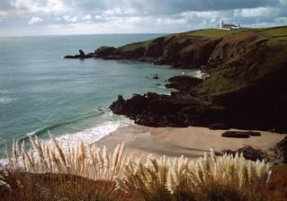Pampas grass frames the tidal beach at Housel Bay, The Lizard, Cornwall