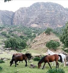 KURDISTAN (Kurdistan Photo كوردستان) Tags: nature kindly tag fantasticnature beautiful earth kurdistan کوردستان land democratic party koerdistan kurdistani kurdistán kurdistanê zagros zoregva zazaki zaxo zindî azadî azmar xebat xaneqînê christianity cegerxwin van love mahabad music arbil democracy freedom genocide herêmakurdistanê hawler hewler hewlêr halabja herêma judaism jerusalem kurdistan4all lalish qamishli qamislo qamishlî qasimlo war erbil efrînê refugee revolution rojava referendum yezidism yazidis yârsânism unhcr peshmerga peshmerge كوردستاني portrait hat people tree vivid garden landscape