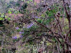 Verde y violeta/ Green and violet (vantcj1) Tags: bosque naturaleza vegetación flores caminata campo rural frutos hierba