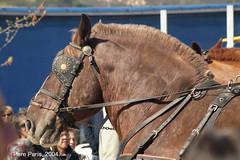 N 454-4 0403 (chausson bs) Tags: tiana trestombs cavalls caballos cavalos horses chevals 2004