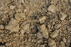 Ground textured surface stone soil background (www.icon0.com) Tags: abstract agriculture backdrop background brown clay closeup desert detail dirt dirty dry dust earth environment environmental garden ground grunge hot land light macro mud natural nature pattern rough rural sand soil stone summer sun sunlight surface terrain texture textured view