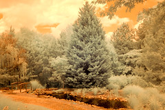 Mostly Conifers - Infrared Color (Neal3K) Tags: fayettecountyga georgia fayettevillega piedmonthenryhospital pond ir 590nmfilter infraredcamera kolarivisionmodifiedcamera