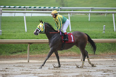 "2016-08-21 (35) r9 Gabriel Saez on #1 Totally Drenched for the win (JLeeFleenor) Tags: photos photography md maryland marylandracing laurelpark jockey جُوكِي ""赛马骑师"" jinete ""競馬騎手"" dżokej jocheu คนขี่ม้าแข่ง jóquei žokej kilparatsastaja rennreiter fantino ""경마 기수"" жокей jokey người horses thoroughbreds equine equestrian cheval cavalo cavallo cavall caballo pferd paard perd hevonen hest hestur cal kon konj beygir capall ceffyl cuddy yarraman faras alogo soos kuda uma pfeerd koin حصان кон 马 häst άλογο סוס घोड़ा 馬 koń лошадь muddy"
