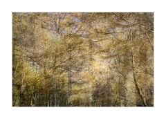 Ennerdale (catkin314) Tags: ennerdale lakedistrict trees colour light multipleexposure abstract autumn