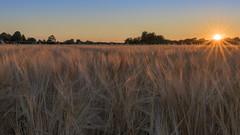 Draycott Sunset (alexcalver) Tags: sunset derbyshire uk england canon 80d 2470l f4