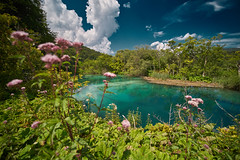 Croatia (silvia_mozzon) Tags: plitvice lake lakes national park nationalpark plitvicelakesnationalpark plitvicelakes croatia europa europe travel travelphotography nature natura landscape landscapesseascapescityscapes parco flowers water clouds pond laghi lago fiori summer sony sonyalpha sonyalpha7 sonya7 manualfocus manuallens manuale laowa 15mm wide wideangle naturephotography plitvička jezera plitvičkajezera