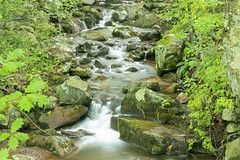 Rocky Stream (William_Doyle) Tags: ken lockwood gorge south branch raritan river august 2018 stream tributary rocks green summer