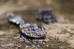 Dried lavender (eleni m) Tags: lavender lavendel dried gedroogd flower flowers plant outdoor garden backyard tabletop macro spoon lepel tin tinnen dof rain regen