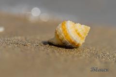 caracola (josmanmelilla) Tags: mar melilla playas verano agua pwmelilla pwdmelilla pwdemelilla españa sony