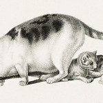 Illustration of domestic cat eating while kittens play by Gottfried Mind (1768-1814). Original from Library of Congress. Digitally enhanced by rawpixel. thumbnail