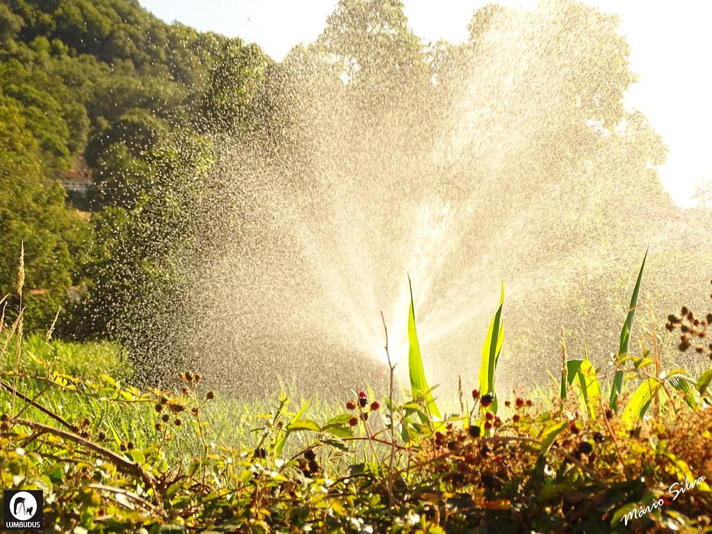 Águas Frias (Chaves) - ... regando o milho ...