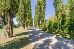 Pappelallee (a7m2) Tags: pappeln allee schwechat mannswörth loweraustria nationalpark donauauen danube naturschutz flora fauna auwald