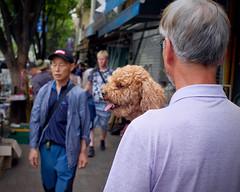 A Dog at the Flea Market (Mondmann) Tags: dongmyofleamarket fleamarket market street streetphotography dog canine animal pet dogcarrier seoul korea southkorea rok republicofkorea asia eastasia mondmann fujifilmx100s