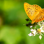 Butterfly - macro of the day thumbnail