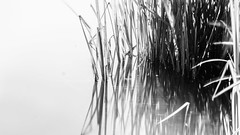 Sommer am See- (iltis-aura) Tags: camping campingplatzweisserbrunnen glamping sommeramsee sommer sonyalpha6000 hamburgerfotofreaks nature abstract grass plant backgrounds outdoors closeup growth white nopeople season summer seed macro meadow