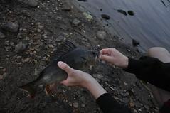 Loofis borre (alex.jorneblom) Tags: fishing torpasjön torpa stenhus fiske lööf boman