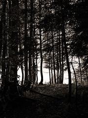 Chartreuse, 2017 (Olivier BERTRAND) Tags: chartreuse massifdelachartreuse blackandwhite blackandwhitephotography digitalphotography forest forêt hiver isère landscape lumix25mm lumix landscapephotography monochrome micro43 noiretblanc nature naturallight olivierbertrand olympusem5markii 25mm winter woods neige primelens