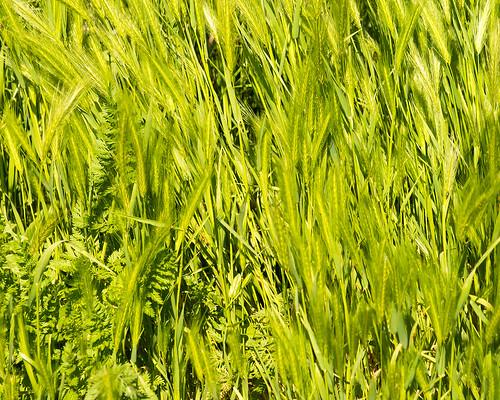 Grass ©  Andrey