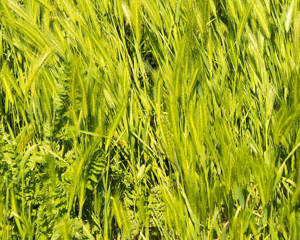 фото: Grass