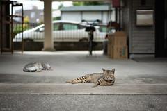 猫 (fumi*23) Tags: ilce7rm3 a7r3 emount 55mm sel55f18z sony sonnartfe55mmf18za neko cat chat gato katze feline animal miyazaki bokeh depthoffield dof ねこ 猫 ソニー 宮崎 路地 街の猫 street alley
