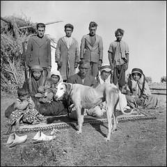 Iran, 1935. (ookami_dou) Tags: vintage iran persia bedouins saluki