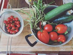 In my garden (alyna16) Tags: food vegetables tomatoes zucchinis garden nature tomates summer