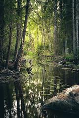 Kirskaanniemi (Olli Tasso) Tags: kirskaanniemi birgitanpolku joki puro virta river suo swamp tampere hervanta suomi finland hiking patikointi retki retkeily outdoors nature luonto luontokuva maisemakuva maisema landscape räme