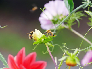 Busy Bee's