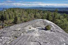 Koli - Finland (Sami Niemeläinen (instagram: santtujns)) Tags: koli suomi finland luonto nature hiking trekking retki retkellä outdoors pielinen lieksa kansallispuisto national park metsä järvi forest lake