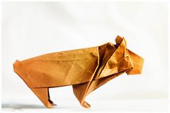 ursus arctos (Mostly Tim) Tags: origami bär bear oso braunbär brownbear paper papier papel
