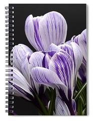 crocus-carlene-smith (Fine Arts Designer) Tags: notebook notebooks writing write stationaery paper spiral