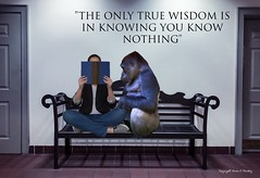 Read to a Friend.... (Little Hand Images) Tags: lindsey gorilla ape bench quote book reading typography commonuncommonalbum