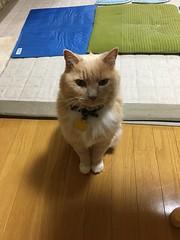 Unfiltered Norio (sjrankin) Tags: 6august2018 edited hokkaido japan animal cat norio floor mat shadow kitahiroshima