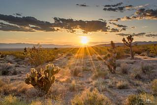 Desert Daydreams