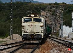 Trn-8451 (Tinico Jones) Tags: tren renfe serie251 serie251derenfe mercancias locomotora