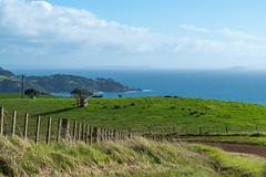 Waiheke Island Backroad (Robert Borden) Tags: waiheke oneroa newzealand islands nz green blue travel 50mm 50mmlens fuji fujifilm fujifilmxt2 fujiphotography vacation farm fence dirtroad ocean