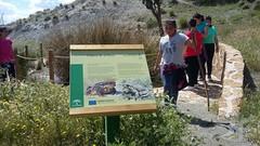 Visita-Area-Recreativa-Puerto-Lobo-Escuela Hogar-Asociacion-San-Jose-Guadix-2018-0008 (Asociación San José - Guadix) Tags: escuela hogar san josé asociación guadix puerto lobo junio 2018