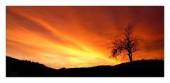 Tempus Fugit (~Scimo~) Tags: sunset tree horizon sony rx100 landscape summer silhouette sky dusk horizont rot red sommer