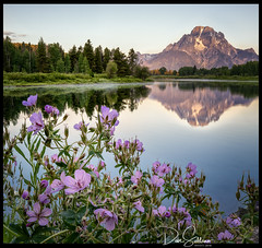 Mt. Moran and Wildflowers (JusDaFax) Tags: oxbow bend grandteton grandtetons nationalpark wyoming visitwyoming wildflowers reflection jackson lake snake river forest mountain alpenglow morning sunrise wanderlust landscapephotography landscapelover landscapehunter landscapelovers landscapecaptures landscapeporn getlost landscapephotomag trappingtones splendidearth agameoftones optoutside discoverearth exploretheglobe nakedplanet placeswow earthfocus ourplanetdaily earthofficial natgeo nationalgeographic awesomeearthpix davesoldanoimages