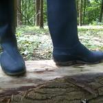 184 -- Stincky and wornout Dunlop Wellies -- Bottes Dunlop puantes et usées --  Gummistiefel  -- Dunlop - Hevea laarzen thumbnail