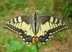 Butterfly (Geo Max) Tags: best beautiful beauty awesome amazing adventure world wonderful wonder wow wild wings explore earth rare universe interesting butterfly travel tbilisi traveling traveltime time cool nice nature nicetime niceview natural georgia great insect