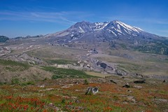 Mt St Helens 9057 A (jim.choate59) Tags: on1pics jchoate mtsthelens mountain volcano indianpaintbrush wildflowers washingtonstate landscape snow caldera sky stump tree