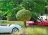 Classic Days Schloss Dyck 2018 - Martin und Jaguar