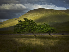Bridge of Orchy Trees, Scotland (ajnabeee) Tags: landscape scenery horizon over land rural scene countryside scenic idyllic hill dramatic sky tree trees scotland bridge orchy glencoe glen coe highlands light drama wind windswept slant couple group loch side water field clouds mountain munro
