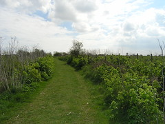 Pegwell Bay Country Park 1667 (Kent Country Parks) Tags: summer autumn spring pegwellbay country countryside kentcountryparks kent