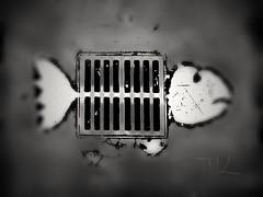 Ghost Fish, Photo: © Tobias Knopf, 2012 (Edition 2018) (spreefire) Tags: ghost fish geist geister fisch fische tobiasknopf