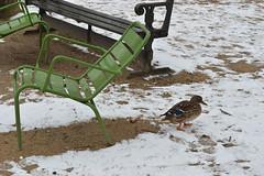 DSC_0527 (Ivan Viana) Tags: nieve snow day día francia france