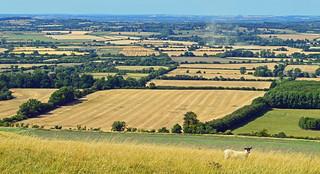 Harvest time, Uffington, Oxfordshire, England