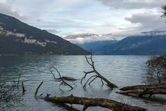 Lake Thun (Bephep2010) Tags: 2017 77 alpen alpha berg bern herbst lakethun landschaft sal1650f28 slta77v schweiz see sony spiez switzerland thunersee wald wasser alps autumn bewölkt cloudy forest lake landscape mountain water
