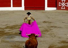 citando de frente (aficion2012) Tags: ceret 2018 toros bull bullfight corrida sao torcato francia france frança catalogne catalunya taureaux taureau tauromachie tauromaquia torero capote capa capeando capear fernando robleno robleño hierro toro céretdetoros são portugal